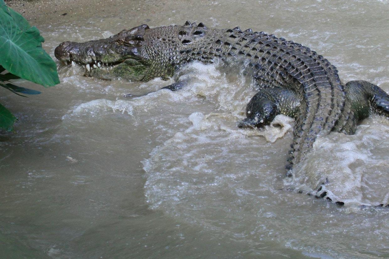 Crocodile safaris