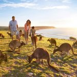 Wildlife Kangaroo Island