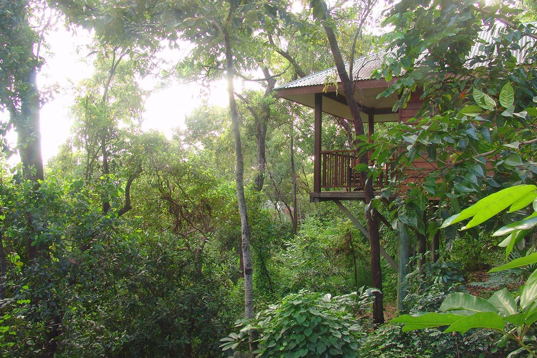 Thala Beach Nature Reserve - Luxury lodge Jungle Australia